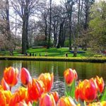 La burbuja especulativa de los tulipanes en Holanda