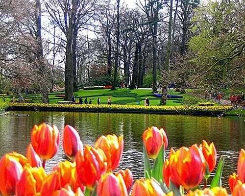 Crisis del Tulipán en Holanda
